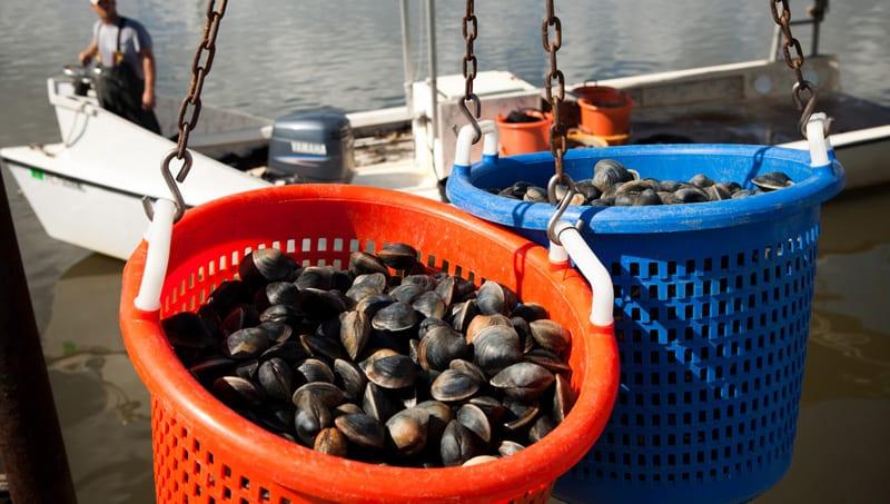 Explore Levy Countys Big Bend Shellfish Trail 04