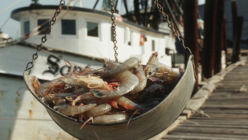 Explore Levy Countys Big Bend Shellfish Trail 05