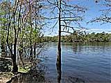 Andrews Wildlife Management Area